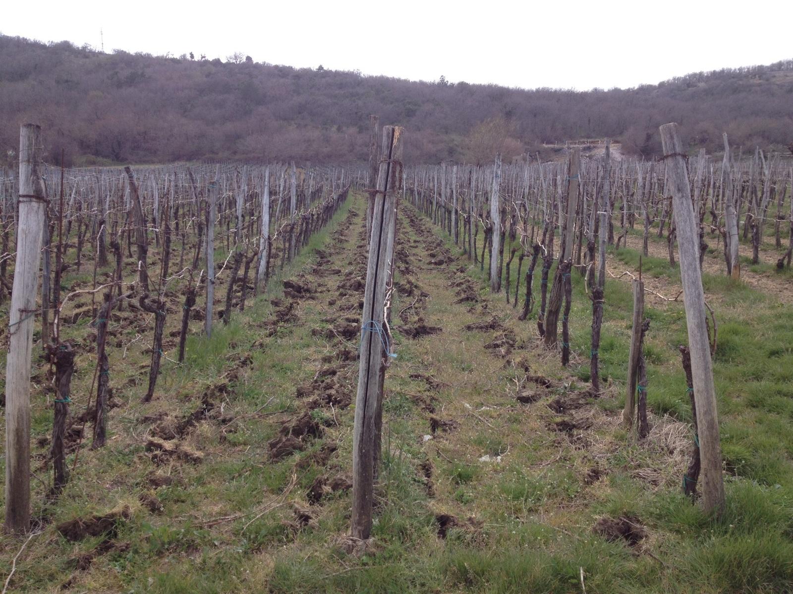 Radovi & poslovi u vinogradu - Page 3 V64qb7