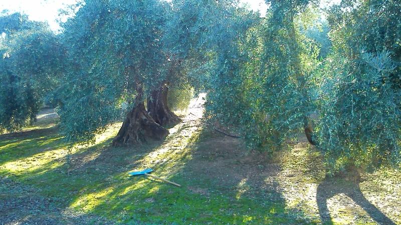 Manejo de suelos y uso de herbicidas 141ty6f