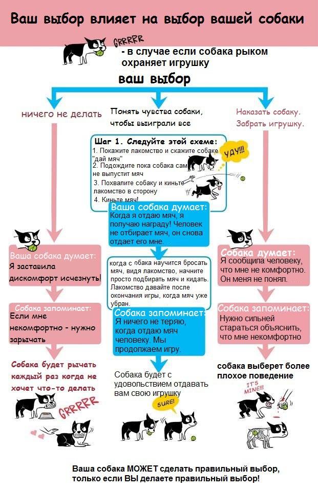 Советы начинающему собаководу (в картинках) - Страница 3 1z1v6za