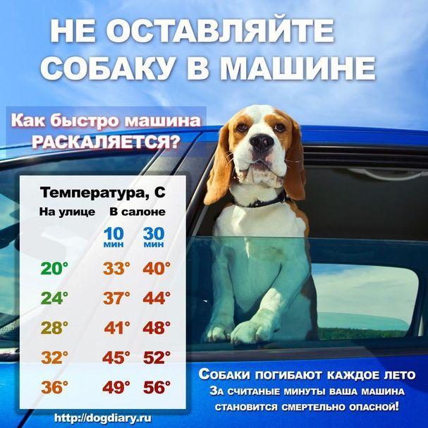 Советы начинающему собаководу (в картинках) 1zh1y5e