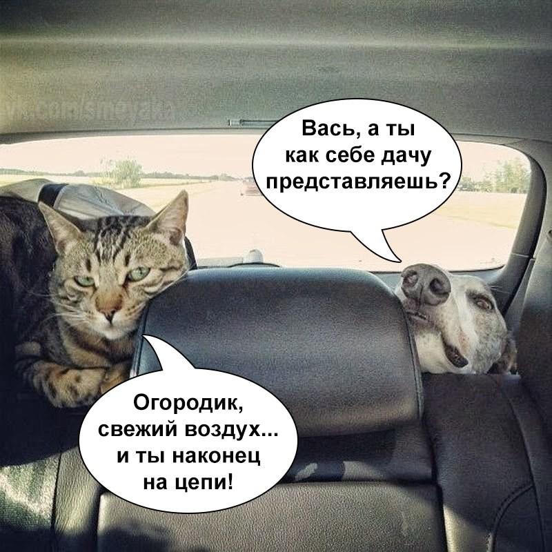Поюморим? Смех продлевает жизнь) 23hpy5w