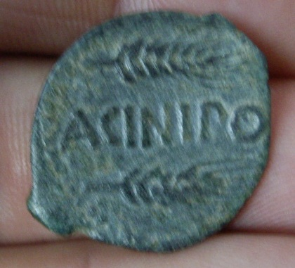 ACINIPO 2lj22hg