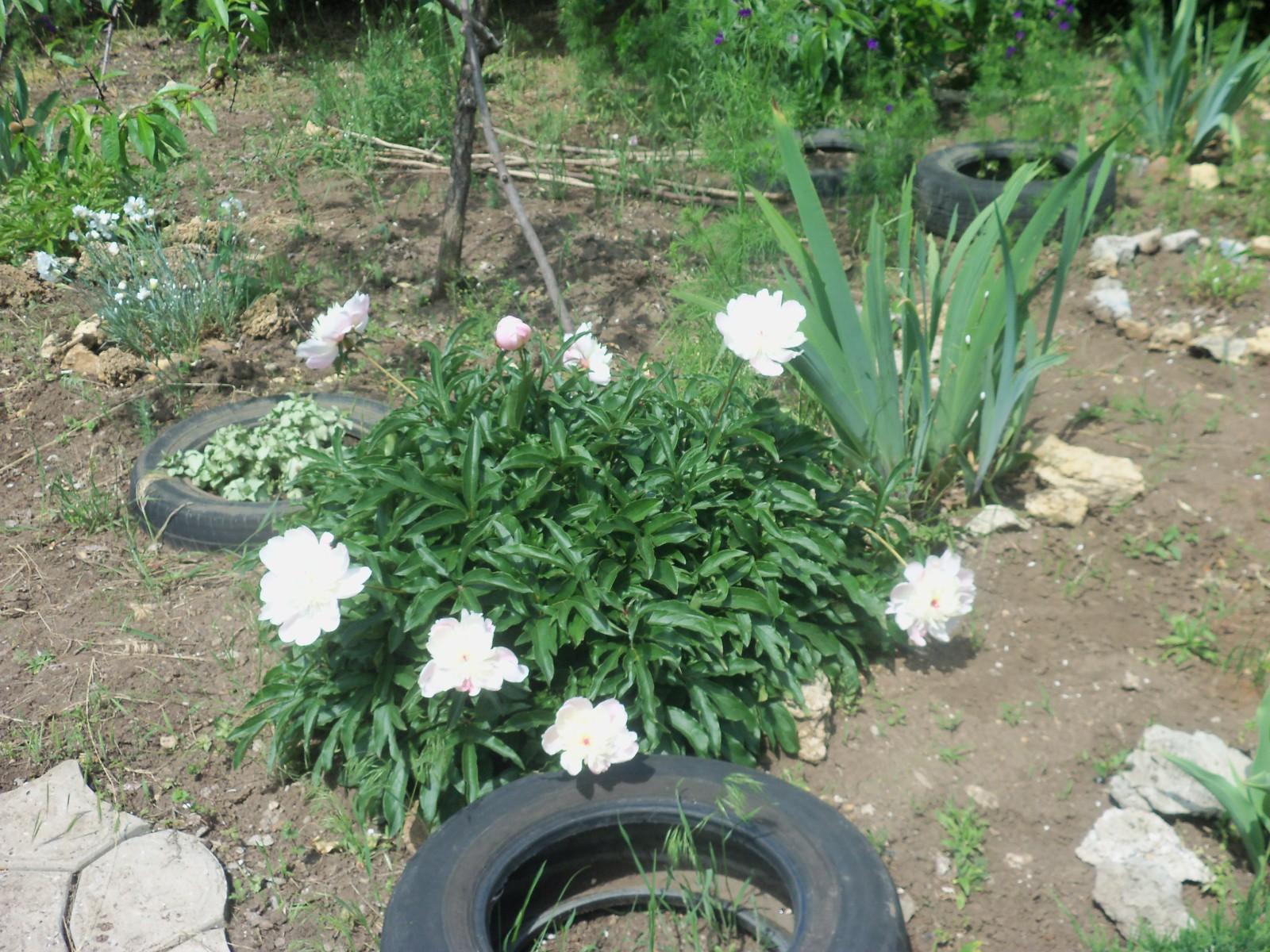 Садовые товарищи - Страница 4 2zfln9l