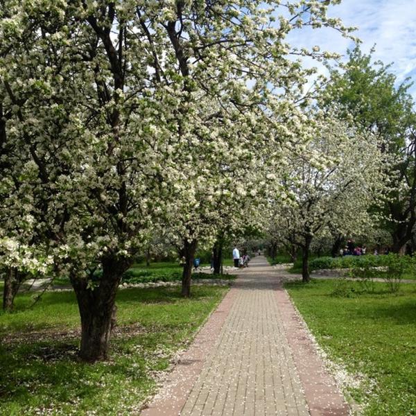 "Природа у ЖК ""Летний сад"" 30cnn7t"