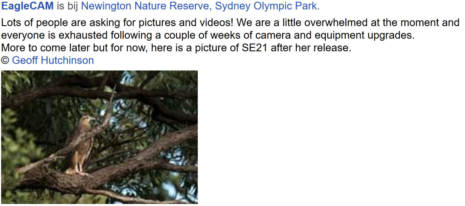 Sidney Sea-Eagle cam. - Pagina 10 6ygxsz