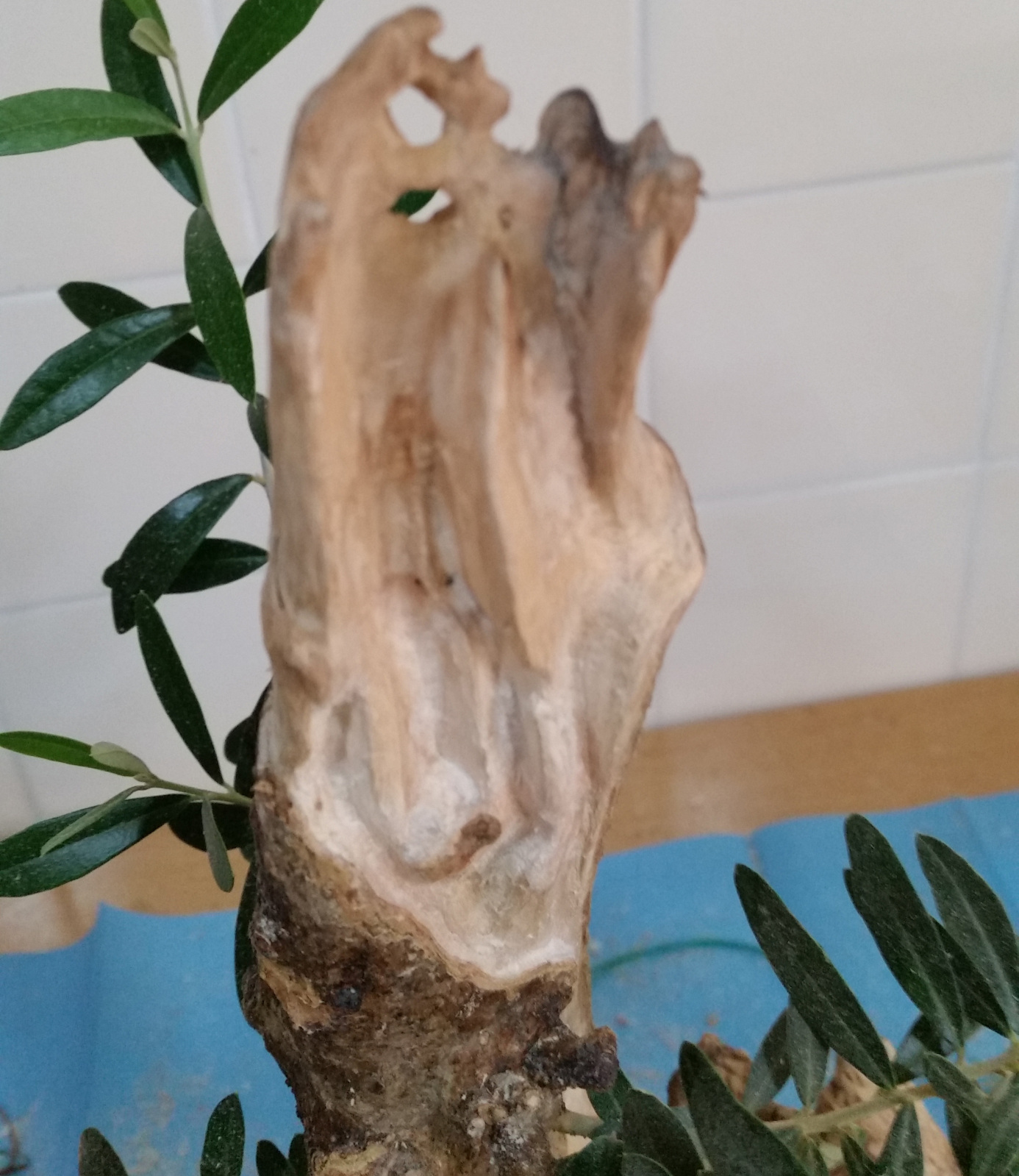 a ver que os parece el trabajo de madera en mi olivo 8zjx4x