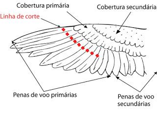 Como cortar as asas da sua calopsita - Dicas A13c7r