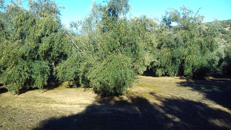 Manejo de suelos y uso de herbicidas Aesbxg