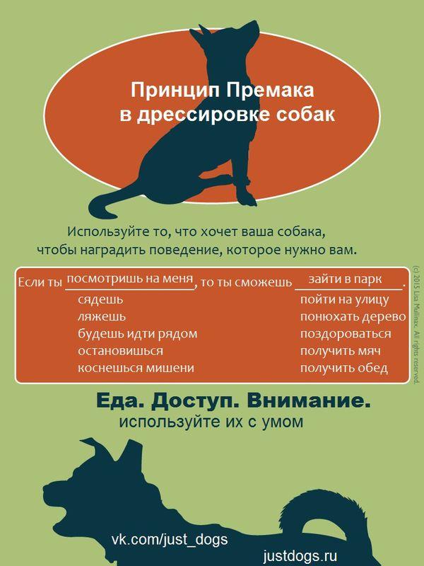 Советы начинающему собаководу (в картинках) Et8veo