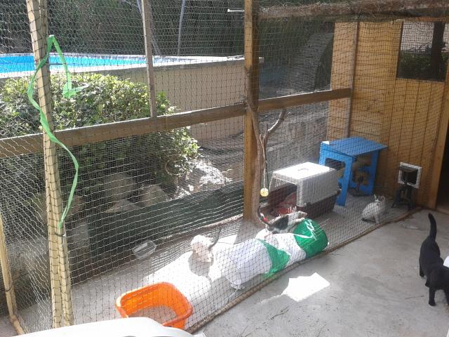"""Residencia felina """"Bon Cat"""" -Valencia- F1ld7t"""