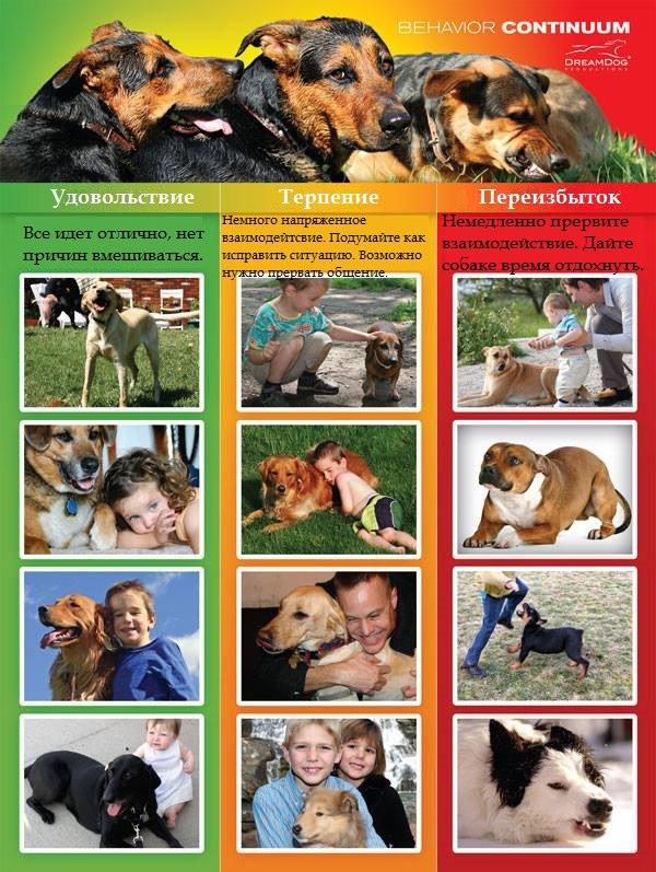 Советы начинающему собаководу (в картинках) - Страница 2 Fvzkzo