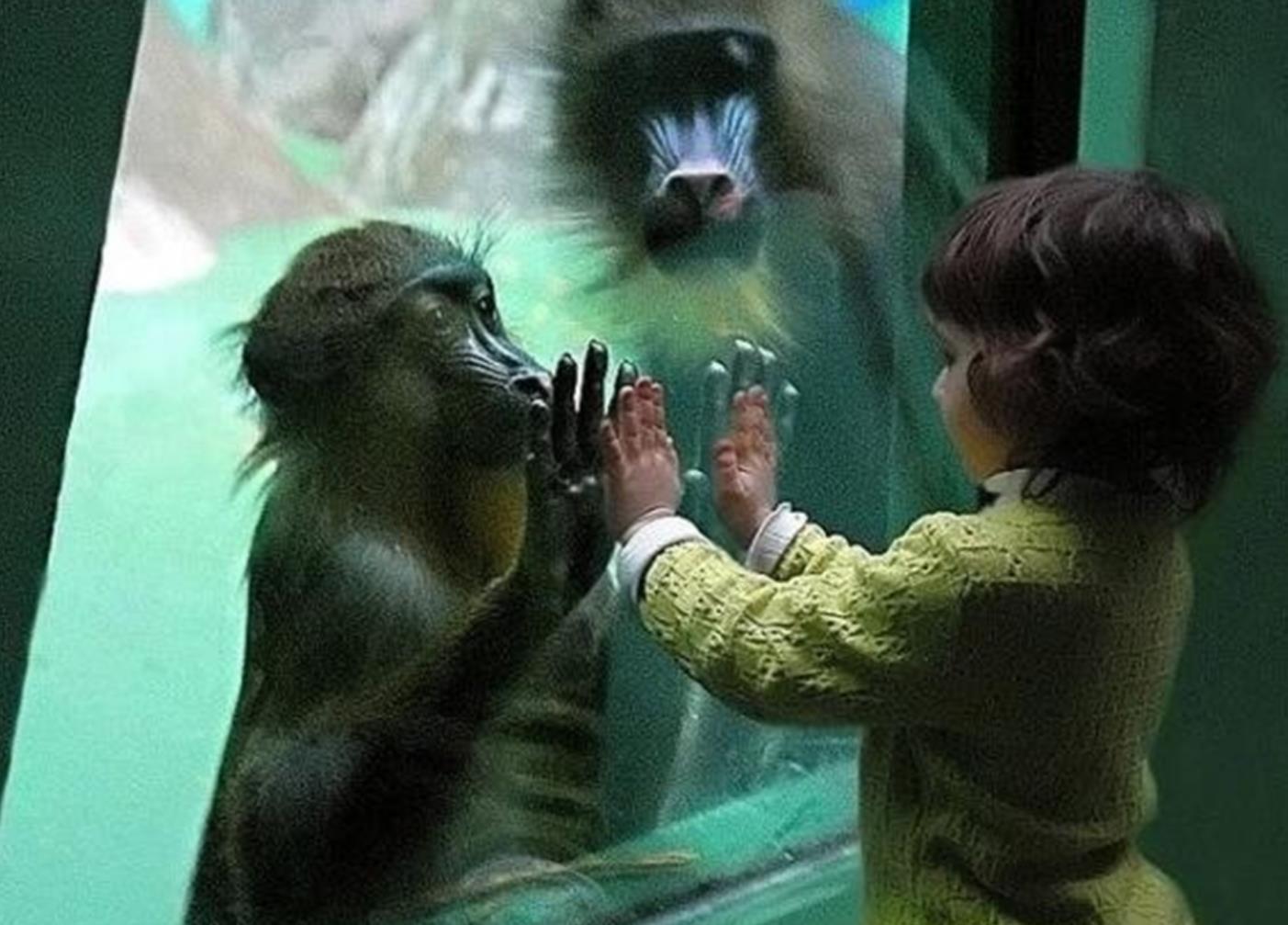Les animaux et nous Migjus