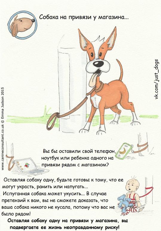 Советы начинающему собаководу (в картинках) Vo33br
