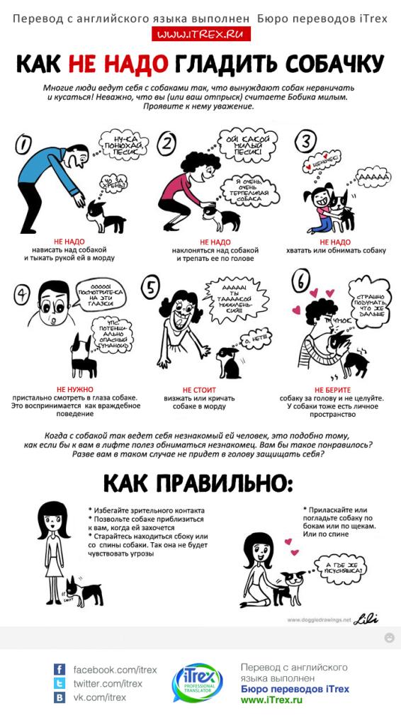 Советы начинающему собаководу (в картинках) - Страница 3 Wqsqrs
