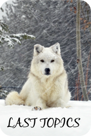 Contactar - Darkmoon Wolves 15s1xkh