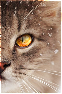 Kitten search - One last time 16k0qas