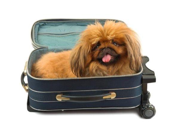 BaDoGood плохая-хорошая собака - Портал 209su49