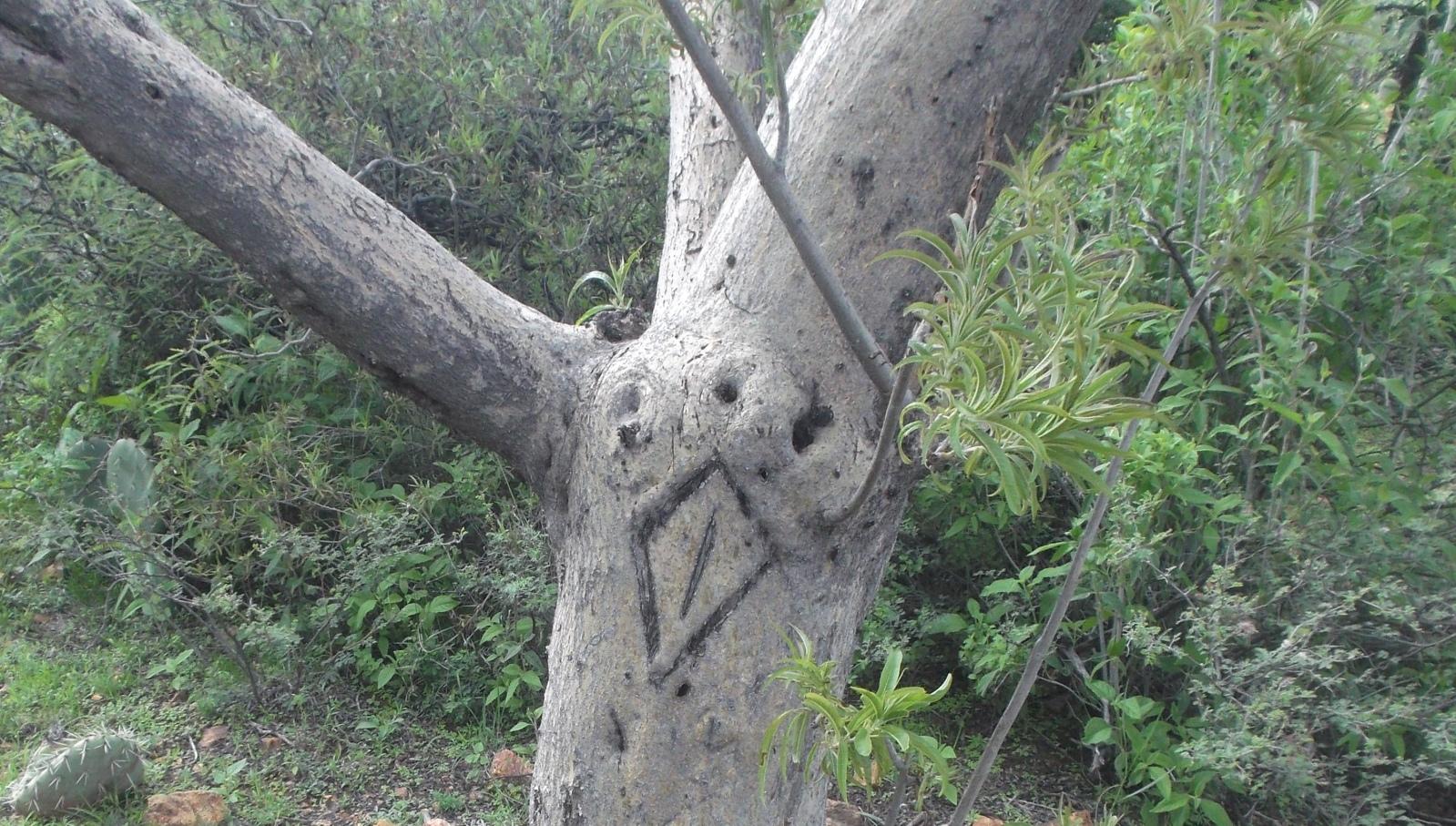 Símbolo en árbol 21lokn8