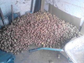 Krumpir       - Page 5 2219mp