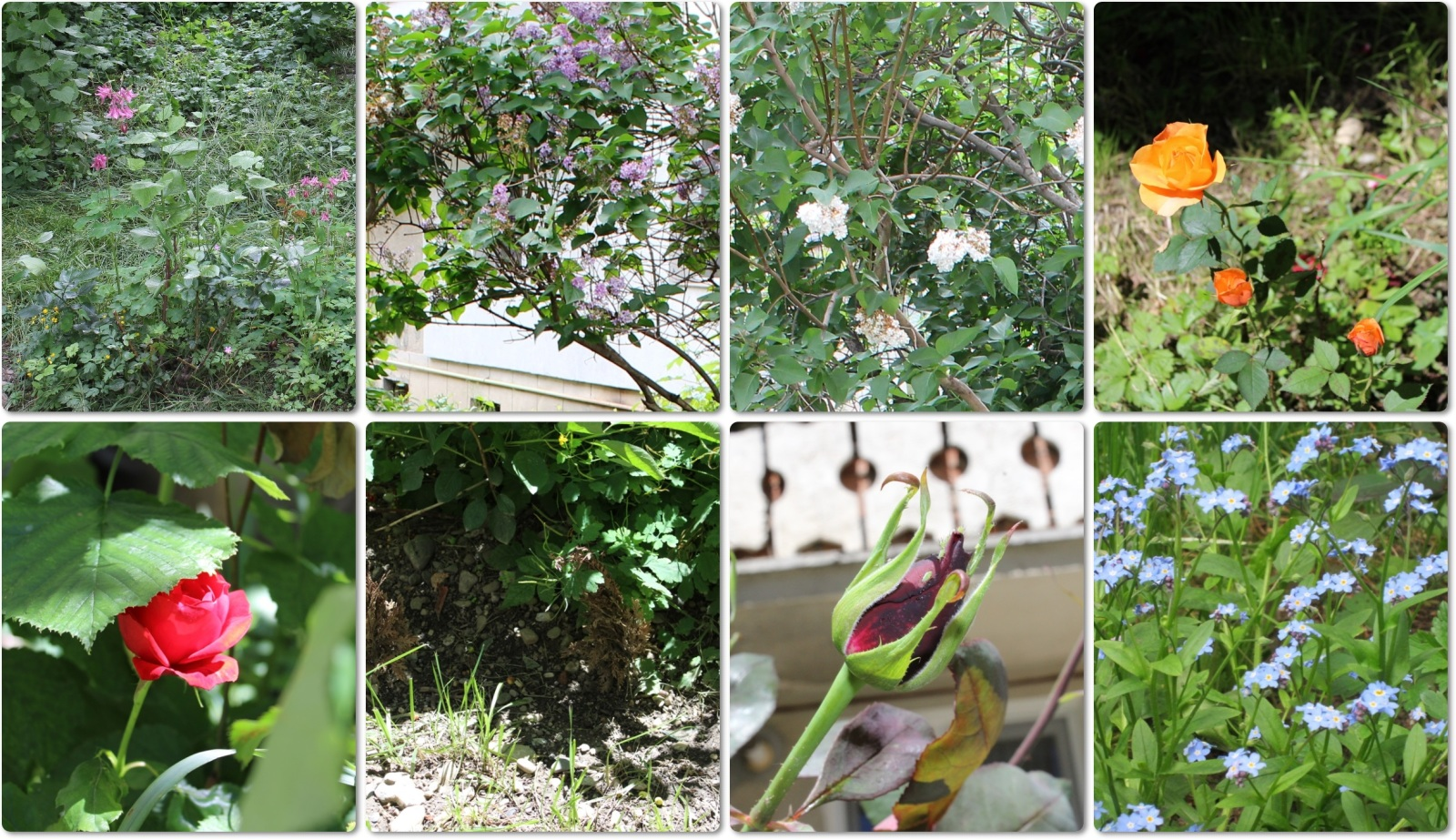 Flori si gradini - Pagina 31 25spkyu