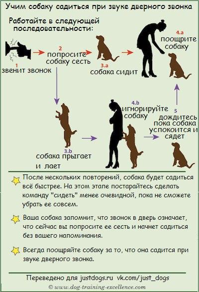 Советы начинающему собаководу (в картинках) - Страница 3 28buyrr