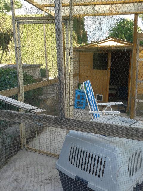 "Residencia felina ""Bon Cat"" -Valencia- 2dj7zuw"