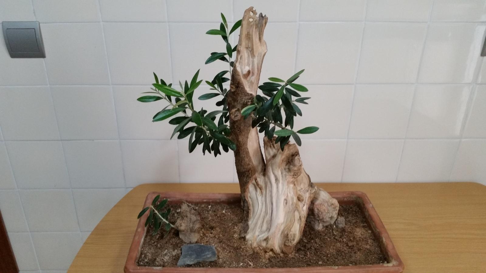 a ver que os parece el trabajo de madera en mi olivo 2euivzc