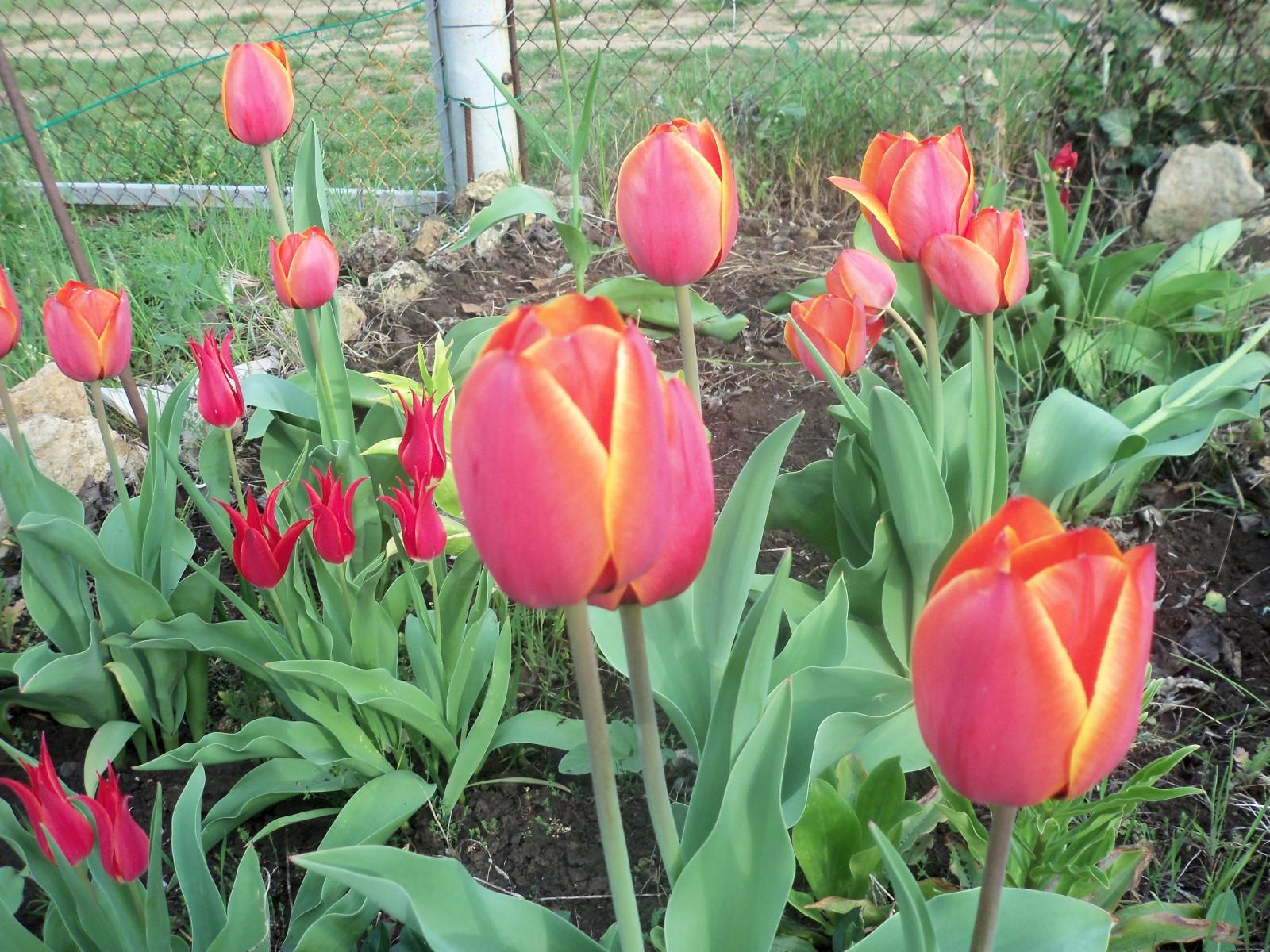 Садовые товарищи - Страница 4 2n894ht