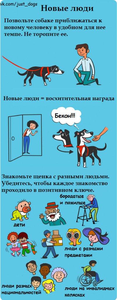 Советы начинающему собаководу (в картинках) - Страница 2 2qxxkrk