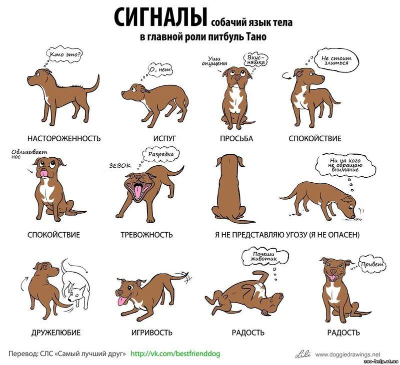 Советы начинающему собаководу (в картинках) - Страница 2 2u6cxp0