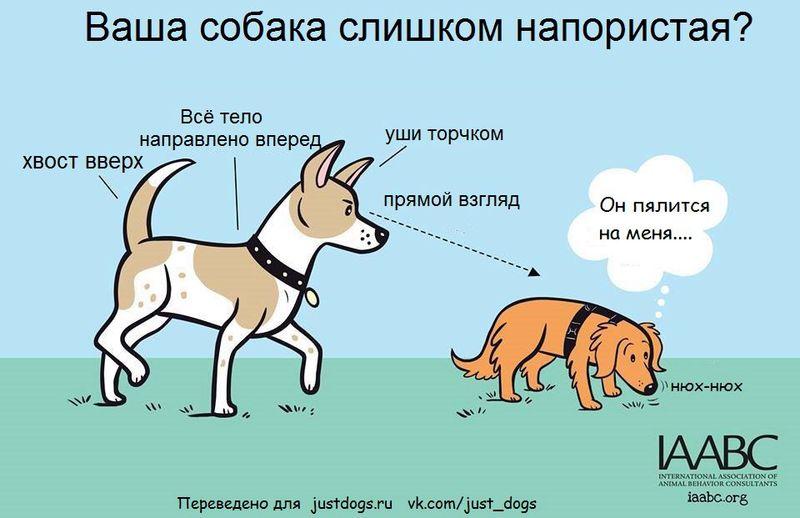 Советы начинающему собаководу (в картинках) - Страница 2 2zrj8dk