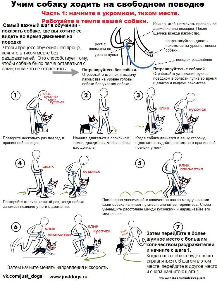 Советы начинающему собаководу (в картинках) 30c28aq