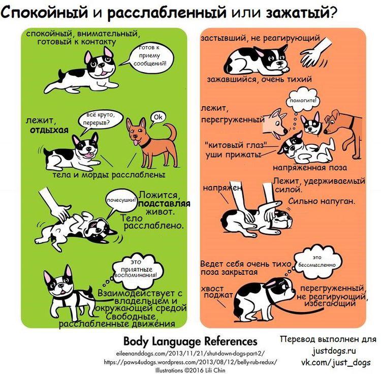 Советы начинающему собаководу (в картинках) - Страница 2 33kqg7s
