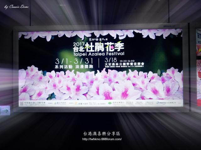 【台北旅遊   賞花】台北杜鵑花季(至2017-3月底) 33wa4vt