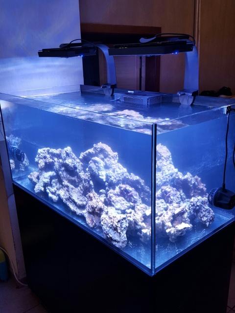 Projet Reefer 425XL - Cordan 9q9yki