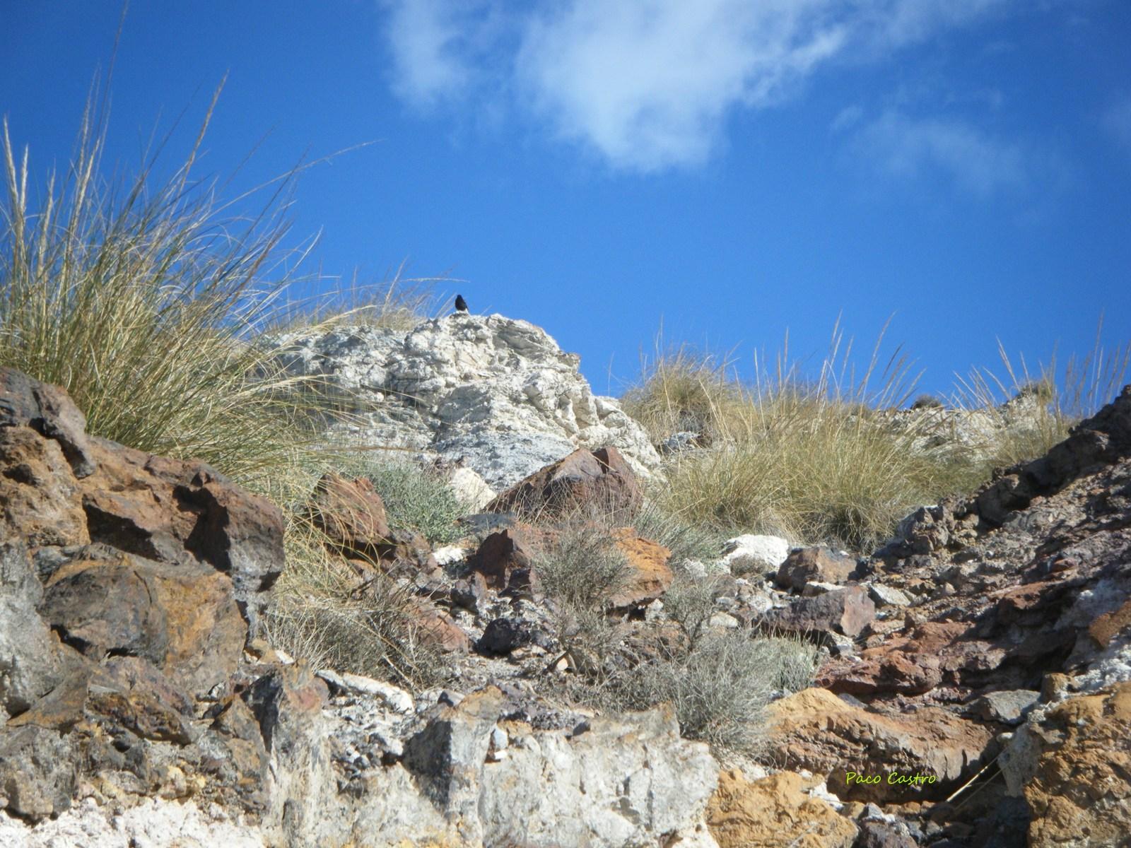 Mina Quince de Noviembre, Los Baños de Sierra Alhamilla, Pechina, Almeria, Andalucia, España E7gjv8