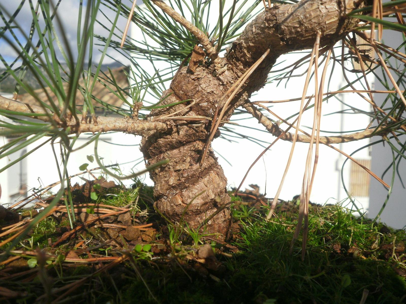 Engrosar tronco - Página 2 Ejcsvb