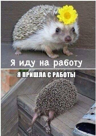 Поюморим? Смех продлевает жизнь) Fonakw