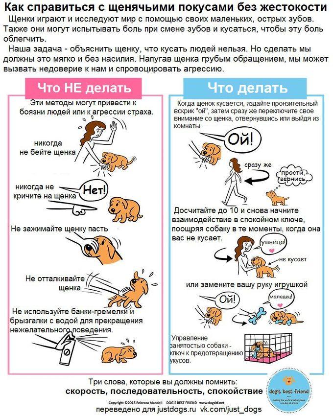 Советы начинающему собаководу (в картинках) Ic4n42