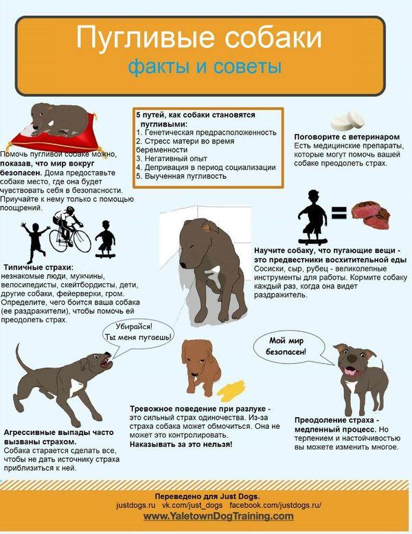 Советы начинающему собаководу (в картинках) - Страница 2 Ipwoj6