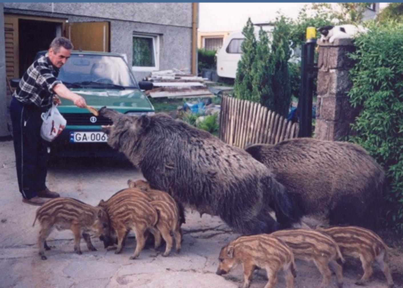 Les animaux et nous Mwzfpt