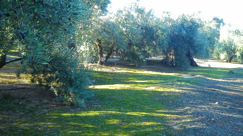 Manejo de suelos y uso de herbicidas R8573s