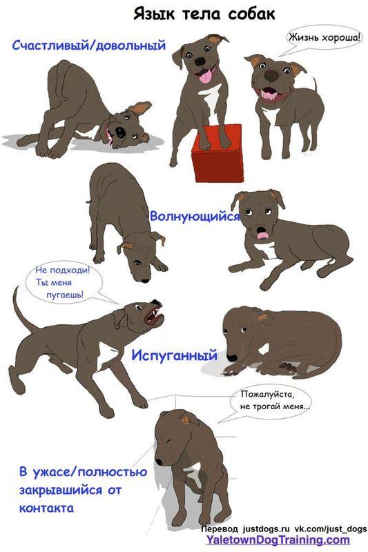 Советы начинающему собаководу (в картинках) - Страница 2 W8vxwn