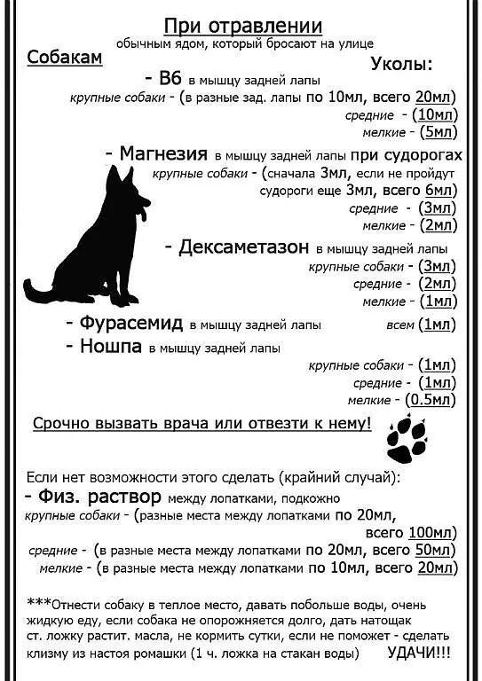 Советы начинающему собаководу (в картинках) - Страница 3 20h5zt5