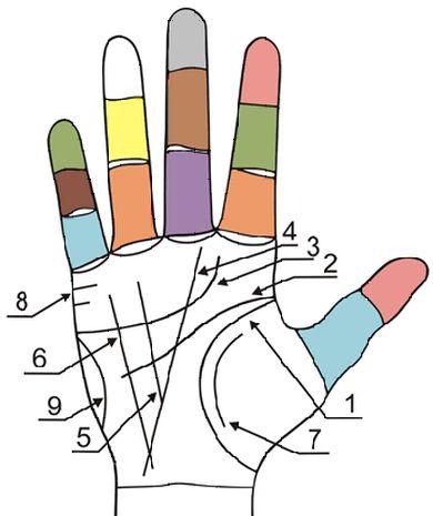 Главные и второстепенные линии на руках 2la9g09