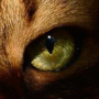 The first warrior cats .... ♥ - Pagina 3 2n99usg