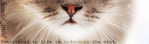 Kitten search - One last time 35kon6v