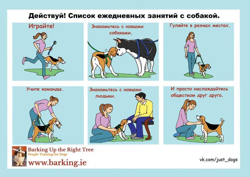 Советы начинающему собаководу (в картинках) Ac7r5z