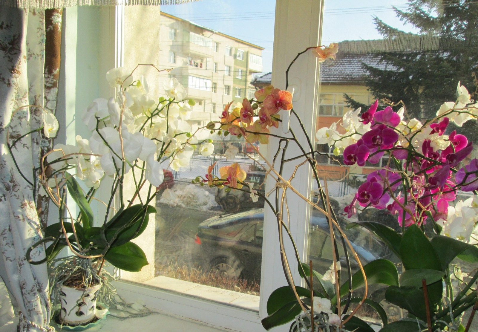 Flori si gradini - Pagina 31 Delfyv