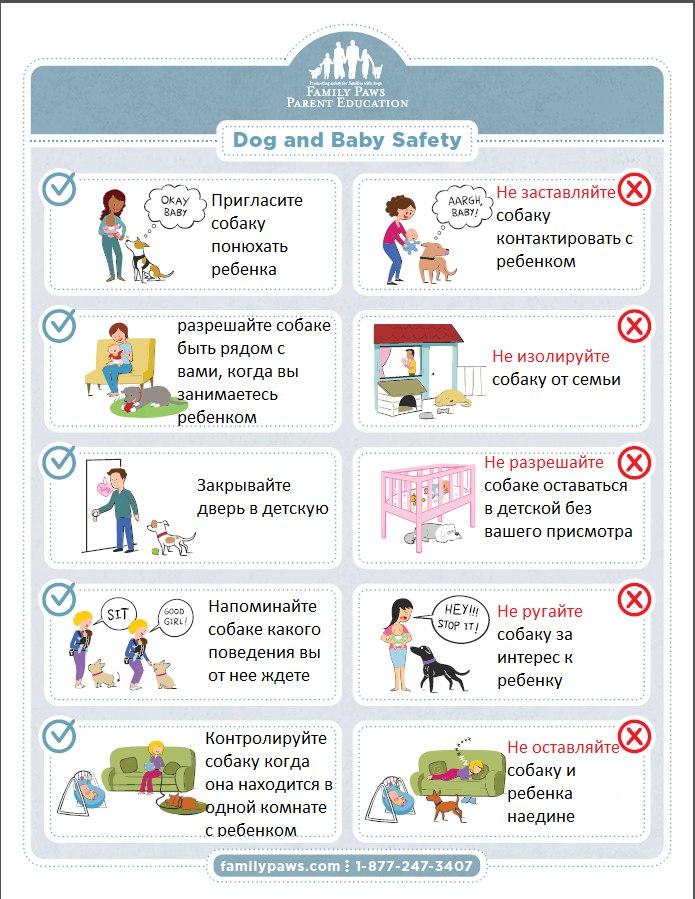 Советы начинающему собаководу (в картинках) - Страница 3 K1faxl